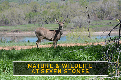 Nature and wildlife at Seven Stones Cemetery near Denver www.discoversevenstones.com