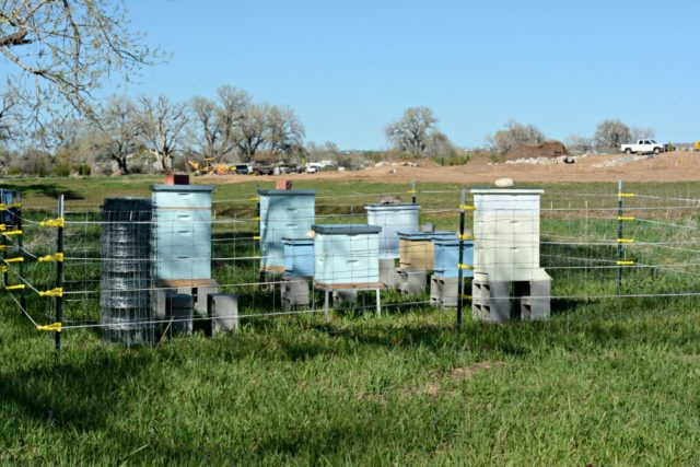 Welcoming the Bees at Seven Stones
