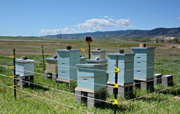 The apiary at Seven Stones botanical gardens cemetery. www.discoversevenstones.com.